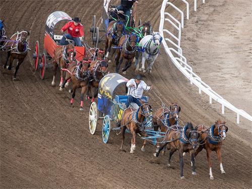 专栏:牛仔竞技动物真的喜欢这项运动吗