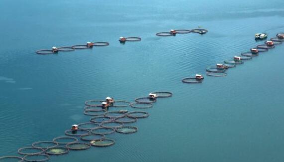 初创科技公司承诺进一步扩大印尼水产养殖业