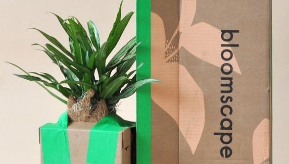 西榆树与DTC工厂品牌Bloomscape合作