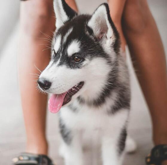 初创公司为宠物主人提供了存储狗干细胞的机会