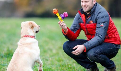 都柏林初创公司咬咬了不断增长的狗玩具和零食市场