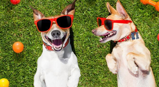 3种可取期货的宠物经济股票