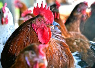 RCL Foods警告当前局势导致利润下降和减记