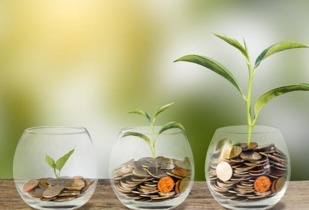 选择固定和遗忘的股息再投资股票