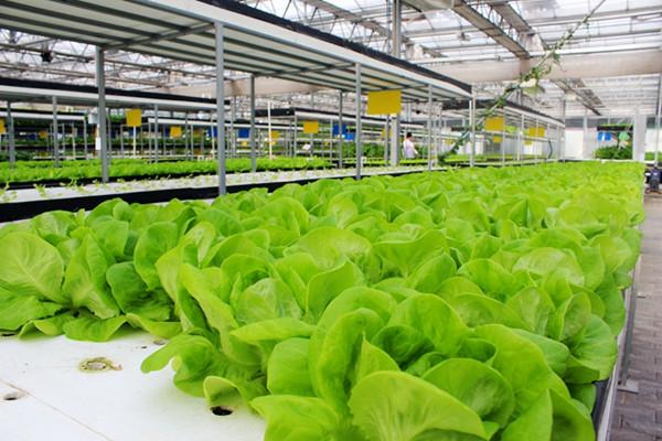 推动农业科技发展,把农民带到市场中