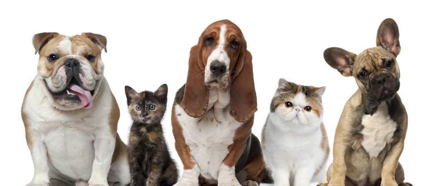 喜欢宠物的人,现在养宠物也是相当赚钱的