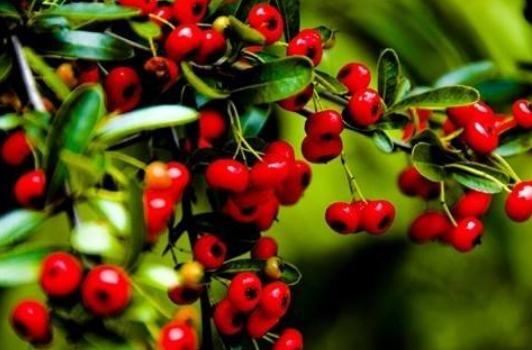 精心种植植物,在市场上都能够卖到一个好的价钱