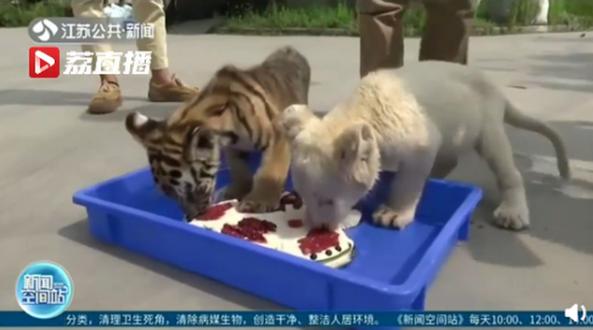 12种野生动物吃到中秋定制的月饼  惹网友羡慕