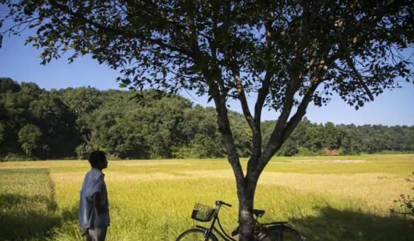 印度政府准备数据库以缓解农业经济